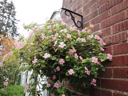 Giỏ hoa treo làm duyên cho ngoại thất