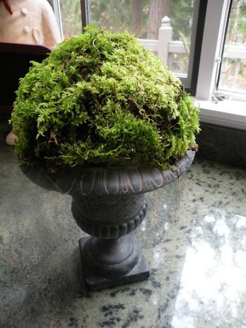 Nhà đẹp với rêu