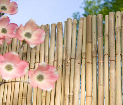 Vẻ đẹp mộc miên của hàng rào tre