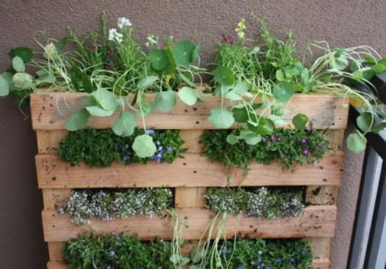 trồng cây cảnh