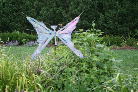 Muôn vẻ hồ điệp trong vườn