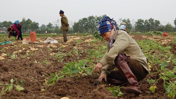 Thời hạn sử dụng đất kéo dài tới năm 2033: Tiếp tục giao đất 20 năm
