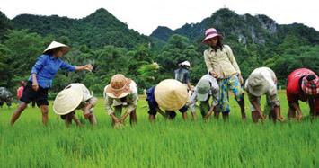 Cần sửa đổi kịp thời những bất cập của Luật và chính sách ruộng đất