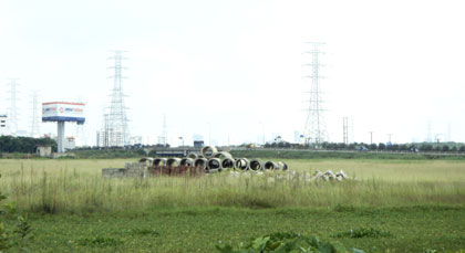 Đất dự án trồng... cỏ