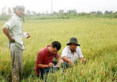 Làm gì để giữ 3,8 triệu ha đất lúa? Bài 1: Đã mất bao nhiêu bờ xôi ruộng mật?