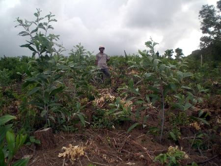 Thừa Thiên-Huế: Uẩn khúc việc biến đất nghĩa trang thành đất trồng rừng
