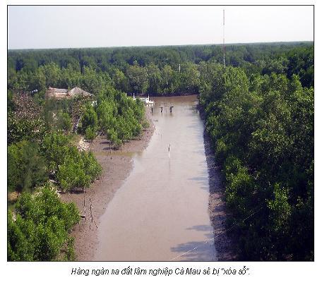 Đốn hạ Vườn quốc gia U Minh Hạ?