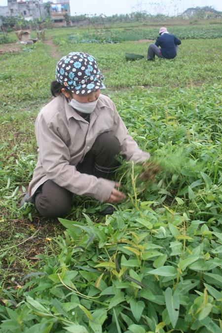 Bồi thường, hỗ trợ, tái định cư: Không để nông dân quá thiệt thòi