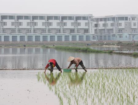 Xung quanh bảng giá đất Hà Nội năm 2012: Xa thị trường nên chỉ để ... tham khảo