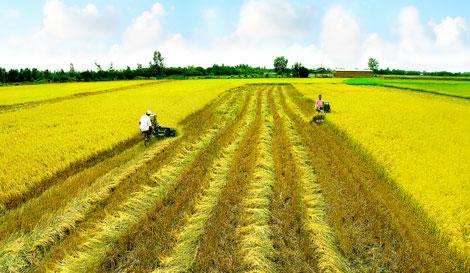 Doanh nghiệp nào được giảm tiền thuê đất?