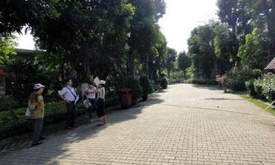 Đô thị càng phát triển: Càng thiếu vắng cây xanh
