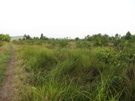 Giám đốc mua bán đất bằng hợp đồng giả tạo
