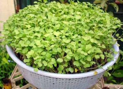 Biến hóa độc đáo với vườn rau trong nhà