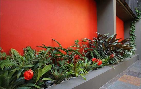 Khu vườn trong nhà phố