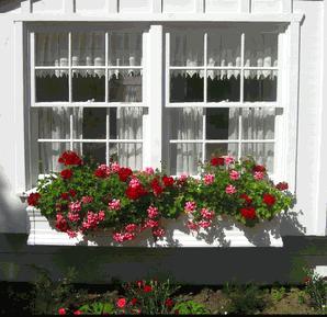 Trang trí cửa sổ đơn giản