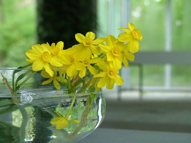 Trang trí hoa ngày Tết