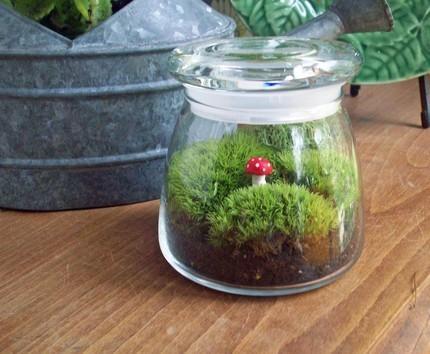Sử dụng lọ thủy tinh trồng cây