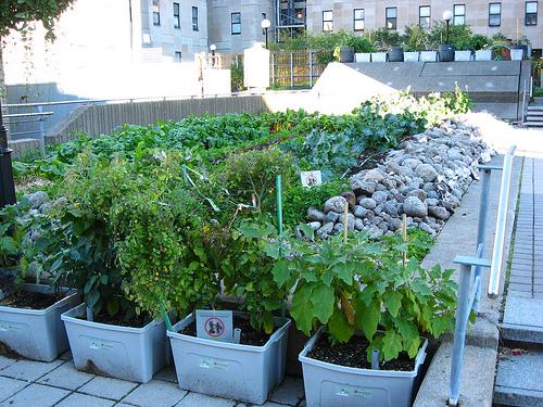 Vườn rau cho nhà phố