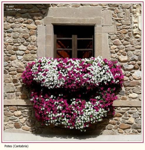 Lời thì thầm của hoa cỏ nơi ban công