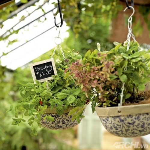 Những khu vườn nhỏ đáng yêu