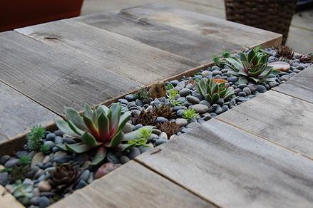 Vườn xương rồng trong nhà