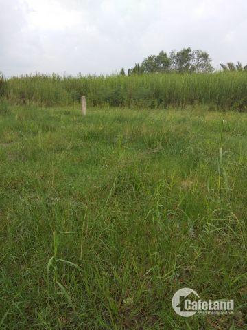 hót! bán nhanh đất thổ vườn 26x25m hẻm 6m sổ hồng riêng chỉ 4tr5/m đan xen kdc tại phạm hữu lầu