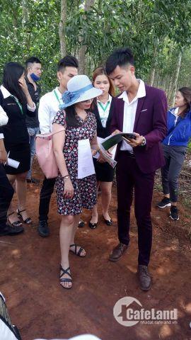 Bán đất tại khu công nghiệp xã Phước Bình, cơ hội đầu tư sinh lời cực cao, vị trí Vip nhất khu vực
