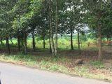 Bán đất Phước Bình,Long Thành,Đồng Nai liên hệ: 0902.730.410