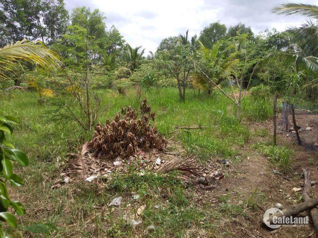 chuyễn đi xa cần bán lại lô đất trồng cây lâu năm 500m 2tỷ750 cách kdc hiện hữu 30m hẻm 6m sổ hồng