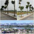 Người Á Đông chọn nhà view Sông - Tài Tâm Riverside