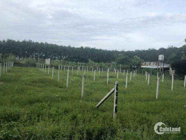 Đất mặt tiền TT Thị trấn Củ chi - thổ cư 100%