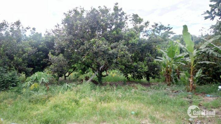Cần bán 7 hecta vườn bưởi da xanh tại Xã Khánh Trung