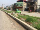 Chính chủ Bán Gấp suất đất biệt thự mặt Hồ Định Công, DT 290 m2 đường hè 17.5m giá 58tr/m cực Hấp Dẫn