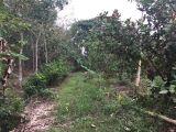 Cần bán đất xã Sông Nhãn,Cẩm Mỹ ,Đồng Nai 0901368085