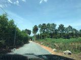 Bán 3 mẫu đất chính chủ đường vào Vingroup chỉ 1.35 tỷ/sào