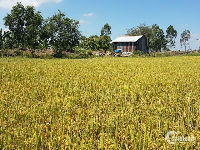 Bán đất nông nghiệp mặt tiền kênh trúng mùa giá tốt