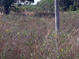 Chính chủ bán lô đất đẹp 613m2 mặt tiền đường Bàu Cạn