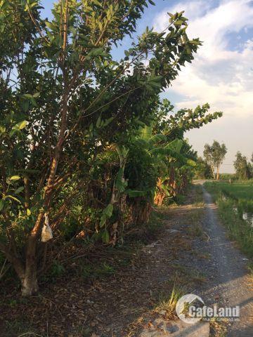 Bán đất Trang Trại gần Sông ngay Cầu Cây Xanh Bình Mỹ Huyện Củ Chi