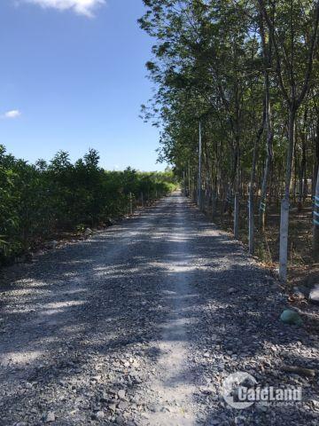 Chính chủ bán đất sau UBND Tân Hiệp, Long Thành, 9500m2(200m2 thổ), 1.9triệu/m2.