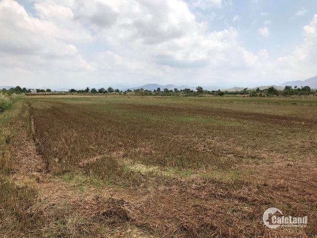 Cần bán 10000m2 đất trồng cây hàng năm tại Xã Bình An, Bắc bình, Bình Thuận