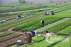 Chính chủ cần bán đất xã Phước Khánh, Nhơn Trạch, Đồng Nai, sổ hồng riêng.