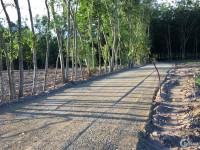 Bán đất Hắc Dịch - Phú Mỹ - Giá rẻ ngay chợ - Sổ riêng - thổ cư 100%