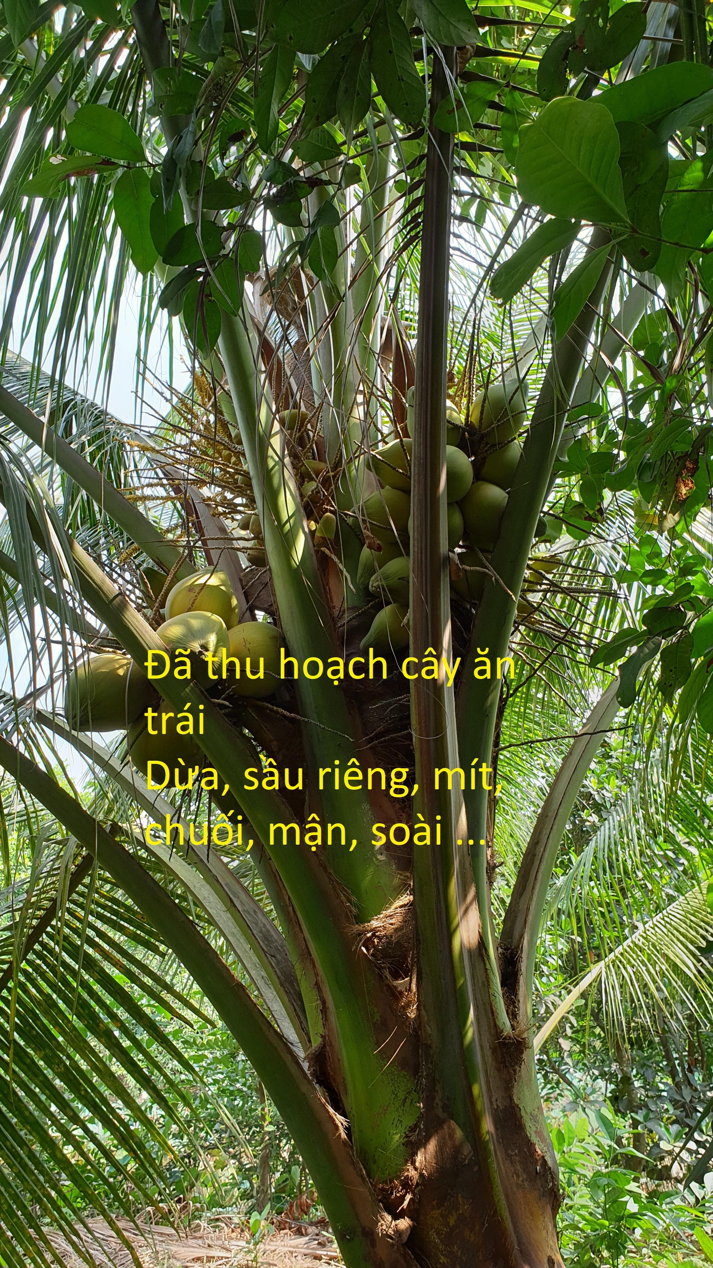 (CHÍNH CHỦ) Bán đất Thổ cư lô góc mặt tiền đường Võ Văn Bích và hẻm ven sông 190 Võ Văn Bích, Củ Chi