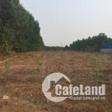 Bán 7 sào đất làm nhà vườn Long Phước, Long Thành gần Vingroup