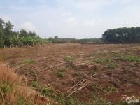 8 sào đất Bàu Cạn giá chỉ 6.5 tỷ, thị trường tiềm năng đầu tư đón đầu sân bay Lo