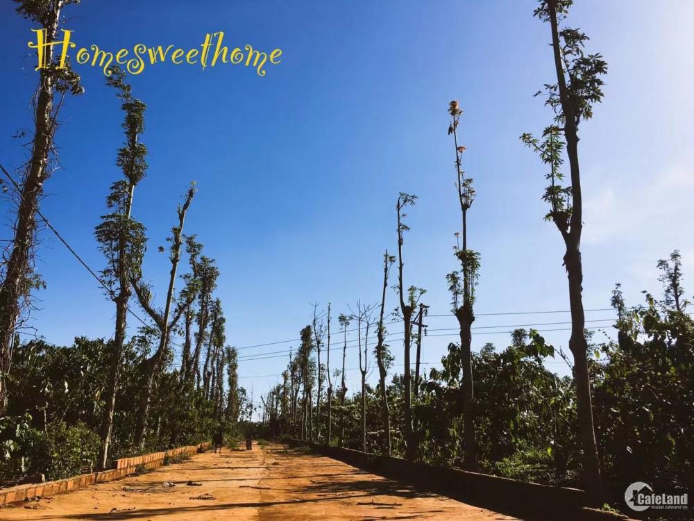 Bán gấp đất trang trại cách đường quốc lộ 663 500m IaPhìn, Chưprông, Gia Lai.