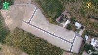 780tr sở hữu ngay đất nền dự án sát sân bay Long Thành sây dựng tự do cam kết có