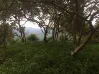 Bán đất vườn điều tuyệt đẹp gần quốc lộ 14 giá chỉ 650tr/ha
