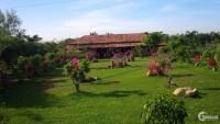 bán gấp Nhà vườn Tân Lập Hàm Thuận Nam Bình Thuận  dtich 5,5 mẫu giá đầu tư