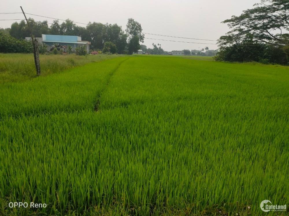 Cần bán đất gấp tại huyện Đức Hòa, Long An, giá tốt